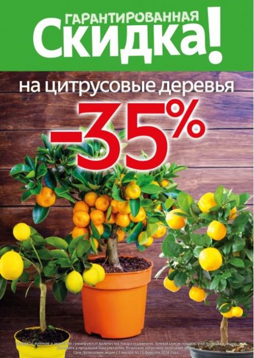 Акции Твой Дом. Скидка 35% на цитрусовые деревья