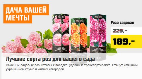 Акции ОБИ 2021. Розы по супер-цене