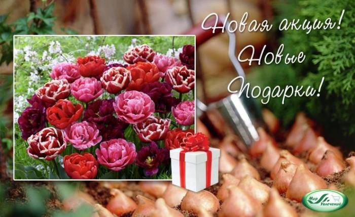 Акция в Мире Увлечений. Набор махровых тюльпанов в подарок