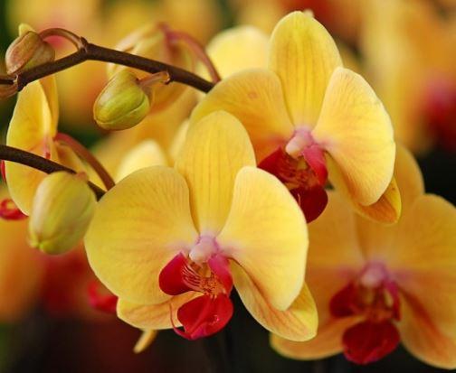 Акция в Твой Дом сегодня. Орхидеи по супер-цене