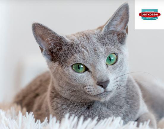 Бетховен - Акция на паучи для кошек