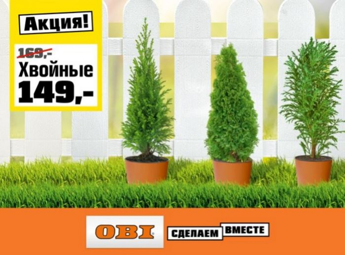 ОБИ - Хвойные растения по специальной цене