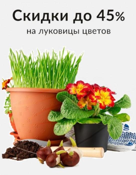 Акции Твой Дом май 2018. До 45% на луковицы цветов