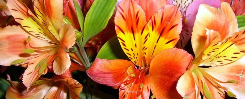 Цветочный магазин Букет Плюс