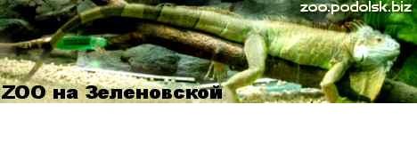 ZOO на Зеленовской