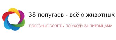 38 Попугаев - Официальный сайт.