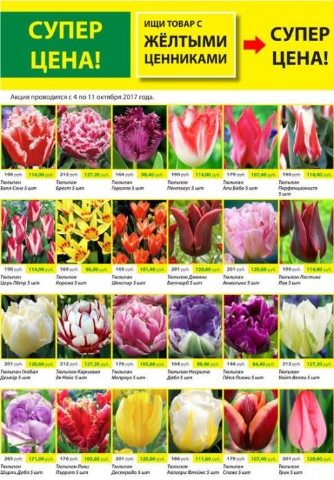 Цветы в магазинах мир увлечений, букет спб оптовая